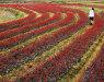 黑龙江:苗木市场变化不大 销量趋于稳定