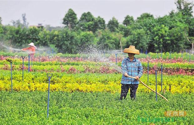 """小农户搭上产业化""""快车"""" 规模大效益高"""
