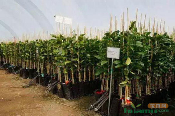 苗木養護新技術 | 水肥一體化滴灌,省錢又省力!