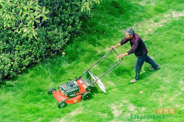 草坪修剪高度的三个标准一定得知道!