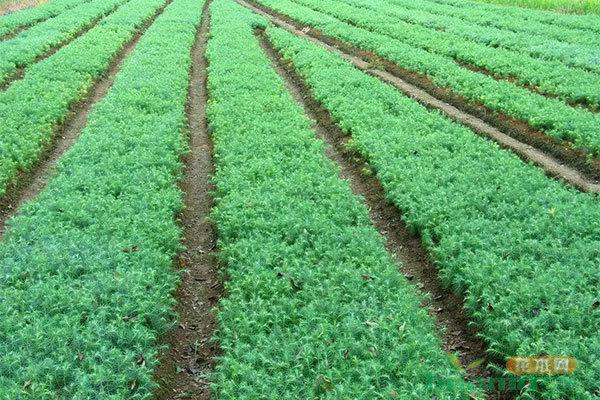 年入500万以上,赚钱的苗圃是如何经营的?