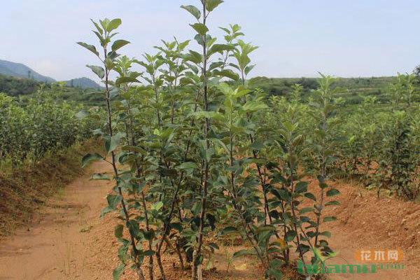 大余:矮化苗木种进庭院或称趋势