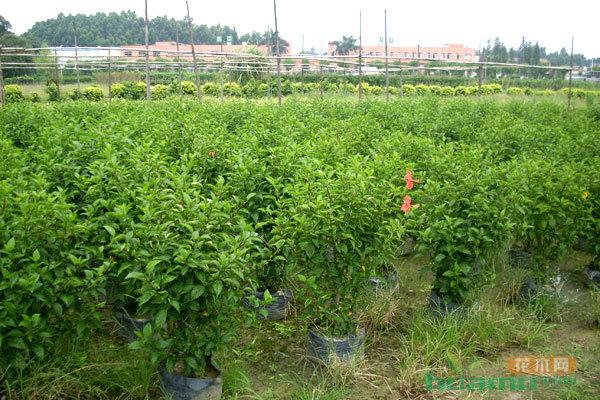 苗木行业的未来发展有哪些需要关注的?