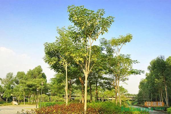 目前国内园林绿化市场的需求和声音