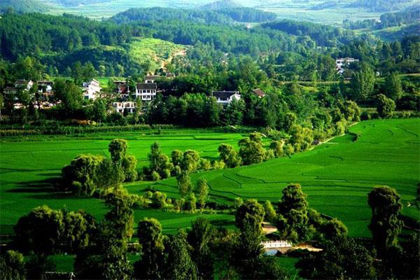 《贵州省林木种苗条例》颁布实施