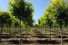 苗木企业是否要交所得税?
