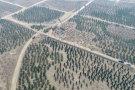 雄安大手笔!明年再植树造林十万亩