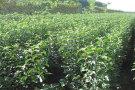 农民专业合作社有哪些政策支持?