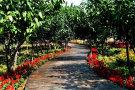 第十八届中国·中原花木交易博览会将在许昌鄢陵举办
