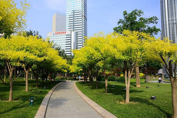 南京绿化新规九月起施行