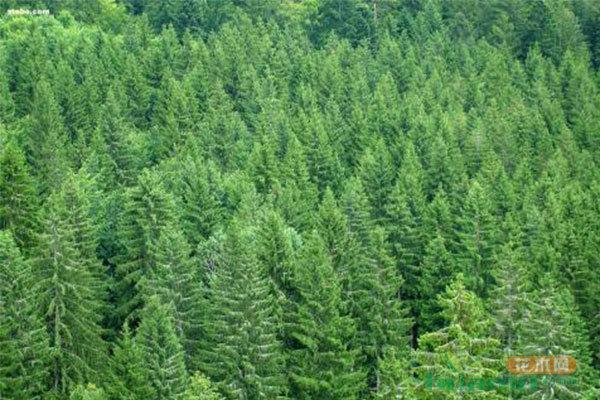 商业性采伐先减后停,森林资源全面休养生息