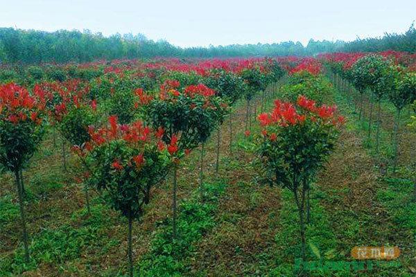 陕西省上半年实现林业产业总产值341.3亿元
