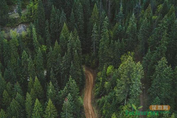 """""""一带一路""""生态治理民间合作国际论坛举办"""