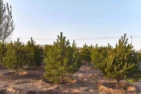 雄安新区启动今秋2.1万亩植树造林项目