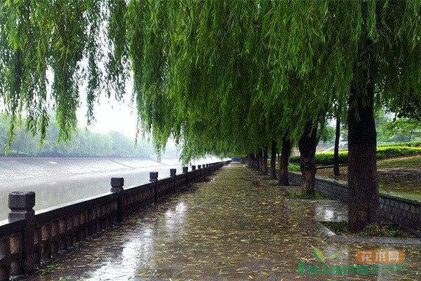 """郑州要给五类区域化""""绿妆"""""""