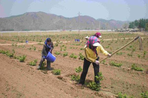 最全的秋季苗圃管理方法,苗圃翻耕作用有多大?