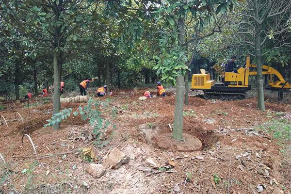 秋冬交替,苗木养护该做的事情