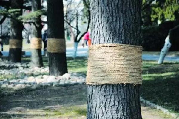 园林养护:今秋这样栽树,保证苗木100%存活