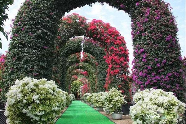 6米高的花廊.jpg