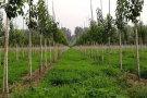 植物新品种维权再迎政策利好
