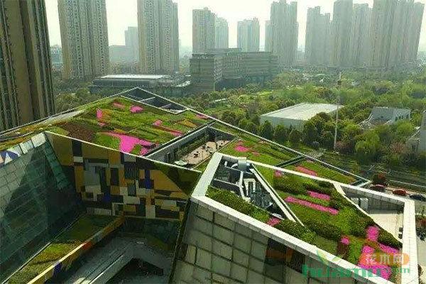 破解造绿缺地难题 城市屋顶绿化大有可为