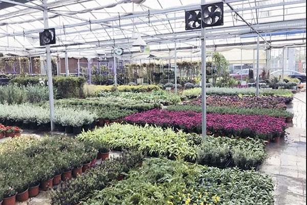 夏溪花木市场庭院植物采购点4.jpg