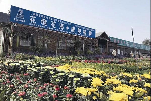 夏溪花木市场庭院植物采购点3.jpg