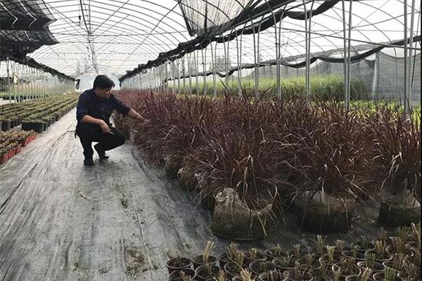 夏溪花木市场庭院植物采购点5.jpg