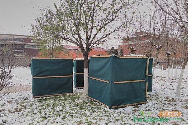 立冬了,苗木越冬防寒要抓紧了!