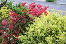 廊坊:关于优选绿化植物提升绿化品质的决议