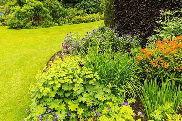 绿化植物.jpg