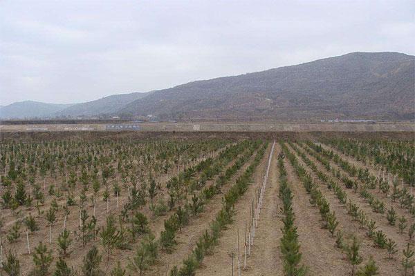 烟台今年造林11.68万亩 全市森林资源实现稳步增长