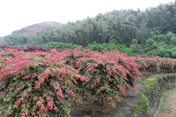 吉林省启动九大林业特色百万工程