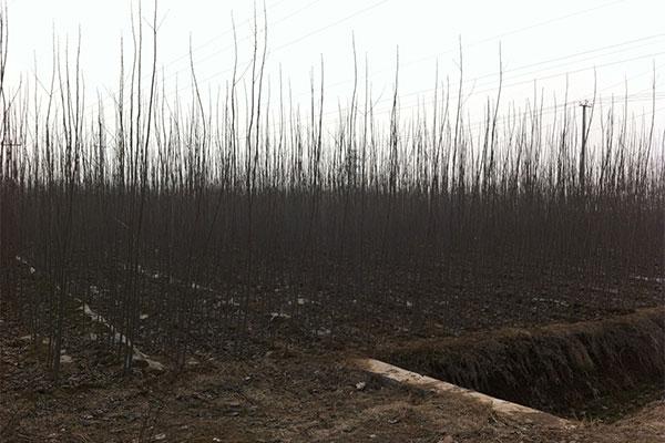 有些苗木移植为什么必须要裸根?