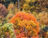 外资造林——长江经济带珍稀树种项目