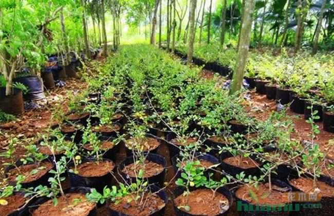 苗木产业转型,协会能做什么?