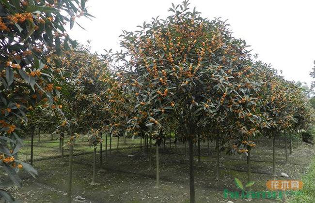 高质量发展现代花木产业 成都温江花木香飘欧洲