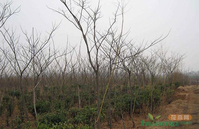 冬季花木病虫害怎么防治?关键技术在这里!