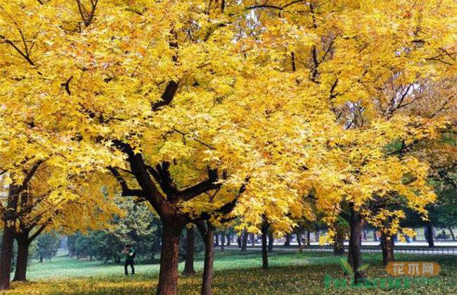 常绿阔叶、彩叶乔木市场前景不错