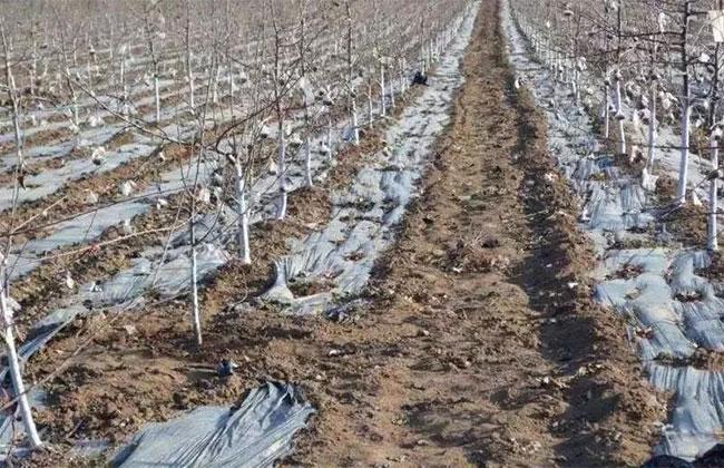 12月份苗木养护管理,老苗农都做了这些...