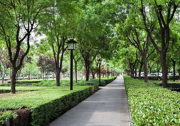 城市绿化.jpg