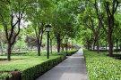 《亳州市城市绿化条例》正式实施