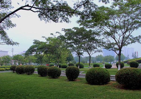 城市绿化2.jpg