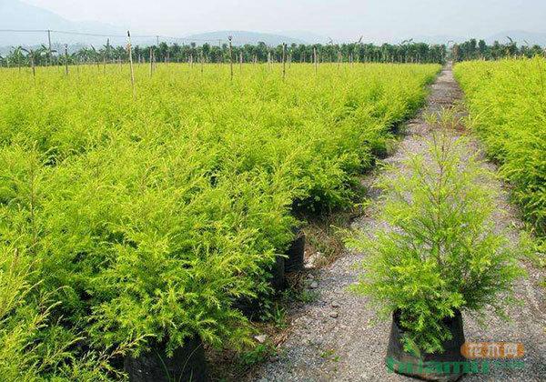 十二月份园林植物管理技术要点