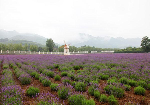 花卉种植面积过万亩 越来越多年轻人回乡发展