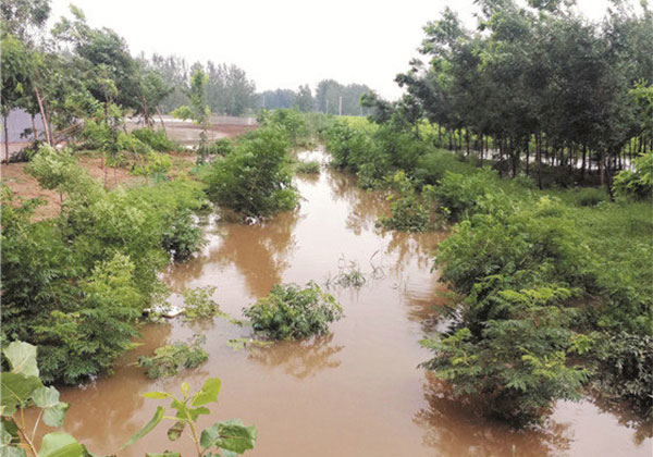 水淹苗圃如何开展自救