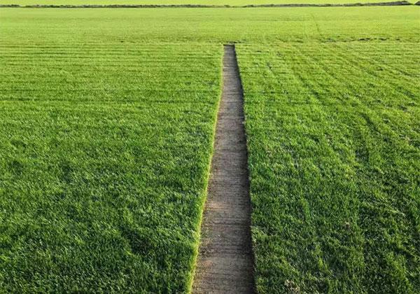 这才是完美的走心草坪.jpg