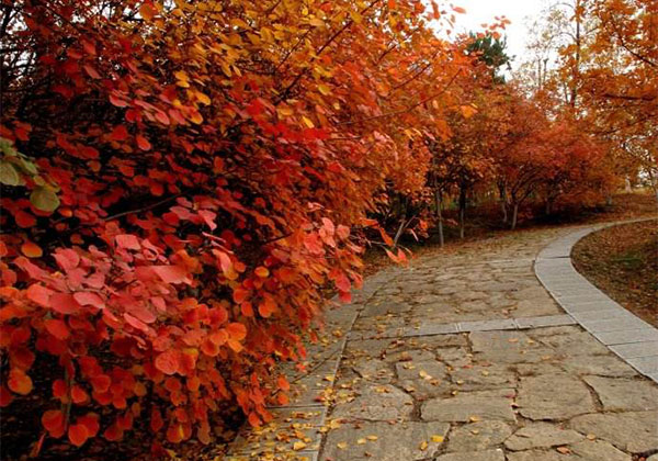 机遇!北京市2019年封山育林23万亩!