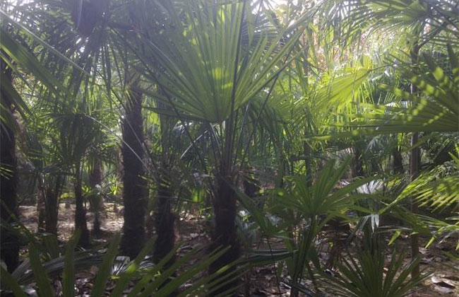 棕榈基地2.jpg