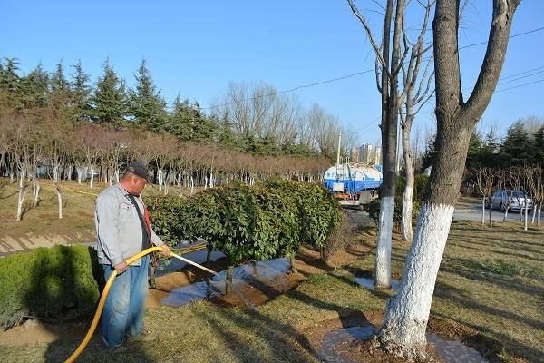 冬季为什么要给苗木浇水?冬季苗木浇水的注意事项